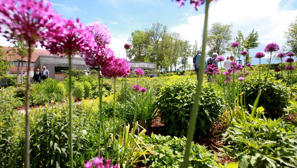 Blütenpracht im Stauden- und Kräutergarten neben dem Schlossgarten.